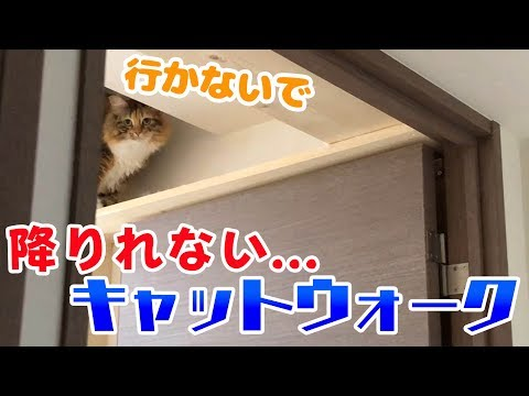 猫はほぼ天井から降りるときどうやって降りるの?