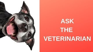 Ask The Veterinarian: How Can I Calculate My Dog's Age In Human Years?
