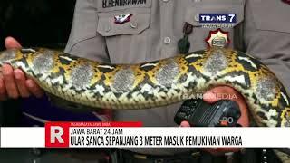 Jawa Barat 24 Jam Mini Bus Terguling di Tol Cipali Ular Sanca 3 Meter Masuk Pemukiman Warga