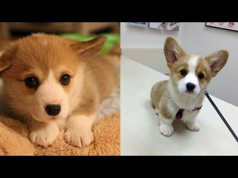 Funny Dogs - A Cute And Funniest Puppy Videos Compilation #5