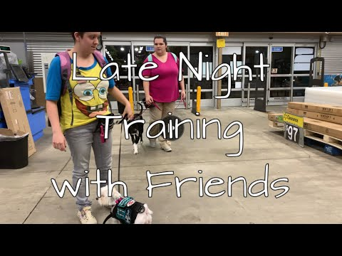 Training a Service Dog with friends