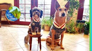 Winter Wonders Welcome: Solstice, Puppy Sweaters, Joy & Dance