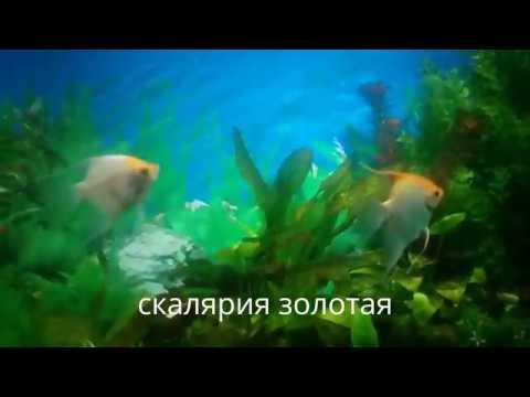 Аквариумные рыбки с названиями 2(видео)
