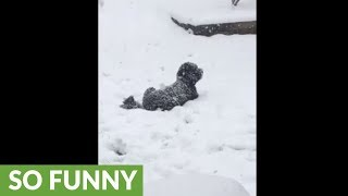 Dog wants to be completely covered by heavy snowfall