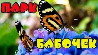 Парк Бабочек. Казань || Butterfly Park(Ссылка на мой канал: https://www.youtube.com/channel/UCGwO... Я посетила парк бабочек в Казани! Моя личная страница в VK: https://vk.c..., 2016-10-01T04:04:38.000Z)