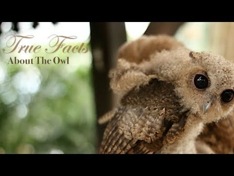 'True Facts About The Owl' Is Adorable Yet Menacing (VIDEO)