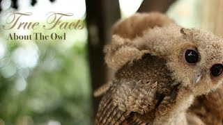 Repeat youtube video True Facts About The Owl