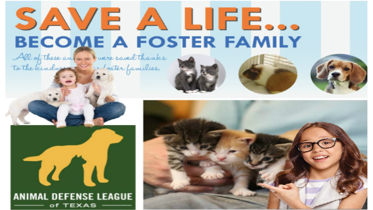 Cat Adoption From The Animal Defense League Of Texas San