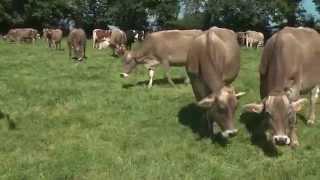 Témoignage d'un éleveur Lactel Bio : l'autonomie au service de la production laitière biologique