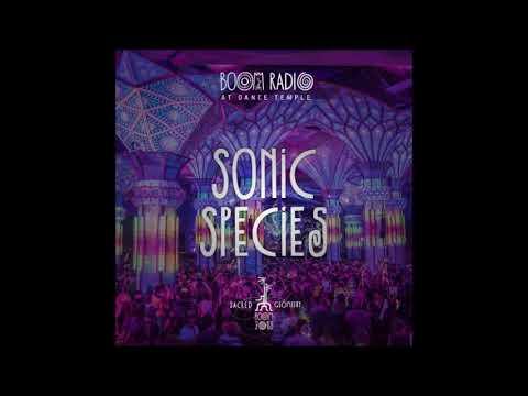 Sonic Species -  Boom Festival  (2018)