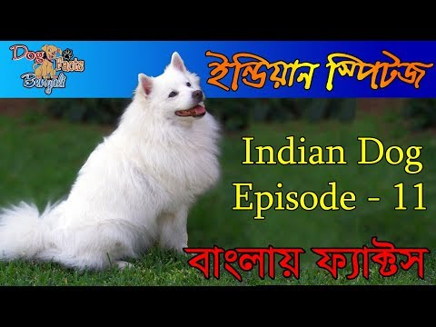 Indian spitz Dog Facts  in Bengali | Indian Dog Facts in Bengali | Popular Indian Dogs