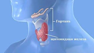 видео Роль щитовидной железы