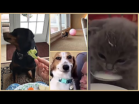 🤣 Funniest Animals🐶 – Funny Animals and Pets Videos Compilation 2020 🤣 Try not Laugh Animal Video#24