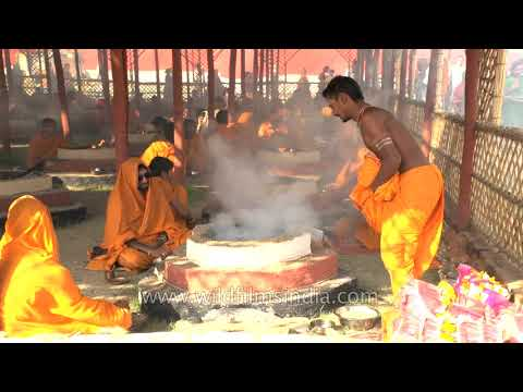 50, 000 tonnes of mango wood to 'reduce' air pollution: Meerut Mahayagna