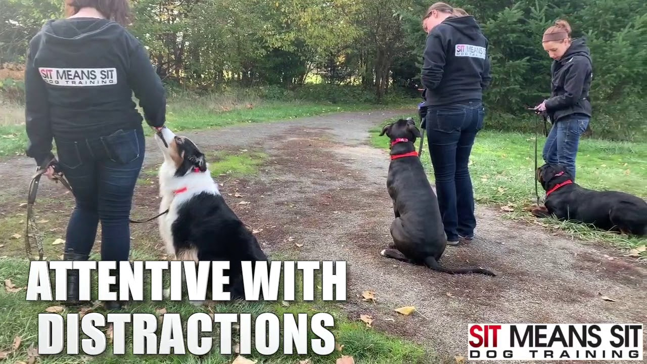 Best Dog Training In Portland Or Beaverton Puppy Trainers
