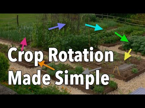 Crop Rotation Made Simple - Rotate Your Vegetable Beds for Healthier Produce