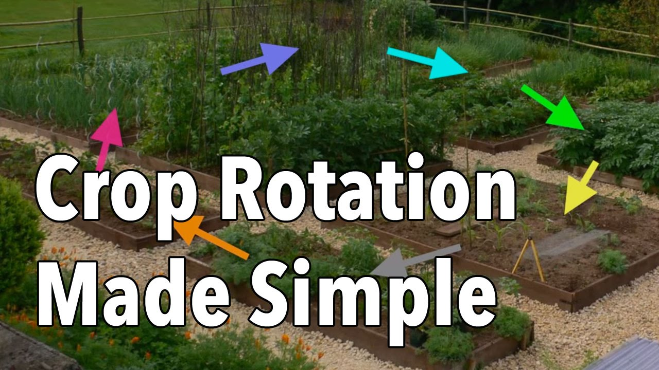 crop rotation made simple rotate your vegetable beds for