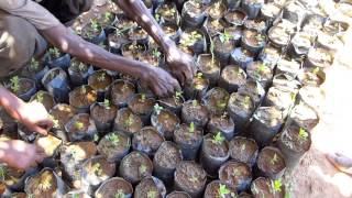 Fruitful Office 2015 Tree Planting - RIPPLE Africa