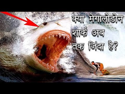 shark-facts-in-hindi-||-क्यू-नही-बोल-पाती-शार्क-||-shark-facts-for-kids-||-shark-history-in-hindi
