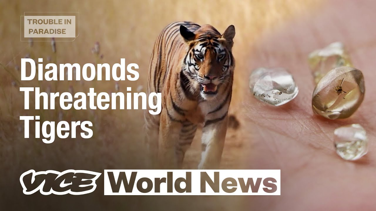 Illegal Diamond Mining Inside a Tiger Reserve | Trouble in Paradise