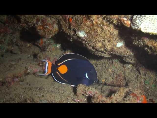 Kauai Dive Sites - Glassbeach