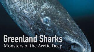 The 500-Year-Old Shark | Greenland Sharks
