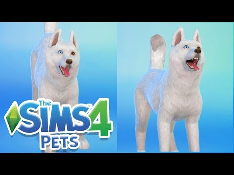 STORM IS HERE! | Sims 100 Cats & Dogs Challenge #3