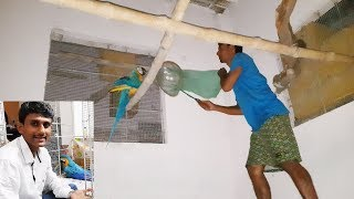 Birds Medicines Care Treatment Tips / How to care Sick bird Parrot / How to keep ill birds parrots.