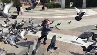 Güvercinlerle kovalamaca