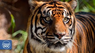 Kanha. Land of the Tiger | Part 4
