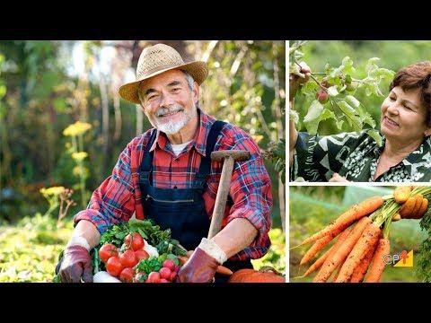 Clique e veja o vídeo Curso a Distância Horta Caseira - Implantação e Cultivo