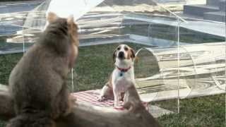 ★ Leo The Lemon Beagle - Trifexis Commercial ★