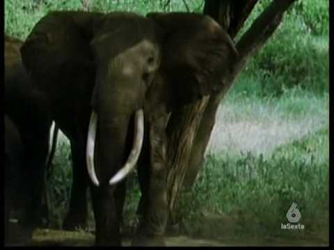 DUELO ANIMAL  ELEFANTE VS RINOCERONTE  1/5
