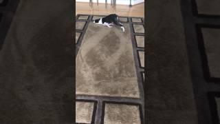 「なにしてんだか…」奇妙な動きでカーペットの上を旋回するワンコ