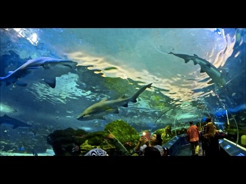 Ripleys Aquarium of Canada (WALKING THROUGH SHARK TANK)