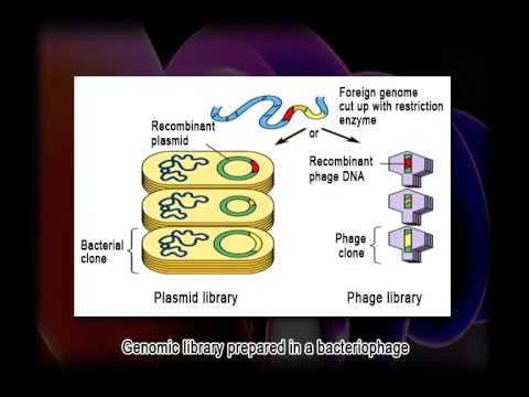 Tools & Techniques of Recombinant DNA Technology