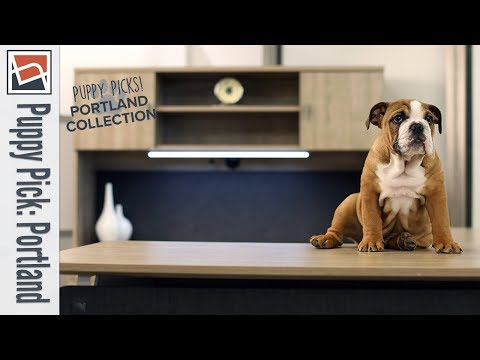 the-portland-collection-|-nbf-puppy-picks