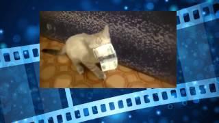 Котик воришка. Котэ отжигает. Смешные животные. Cat thief. Kote annealed. Funny animals