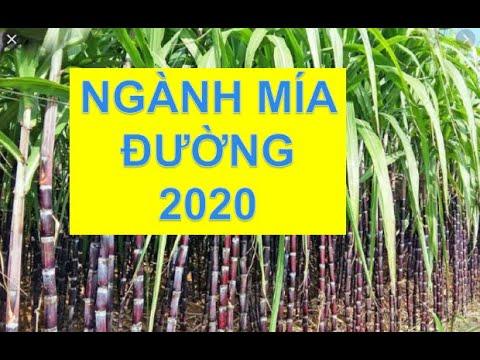 CỔ PHIẾU NGÀNH MÍA ĐƯỜNG 2020 – ĐẦU TƯ CHỨNG KHOÁN