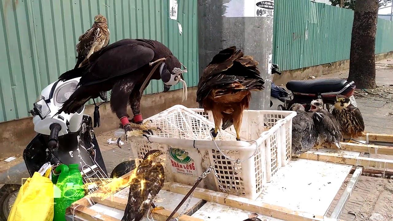 Đại Bàng bày bán 17 triệu đồng ở gần sân bay Tân Sơn Nhất ( sell eagle)