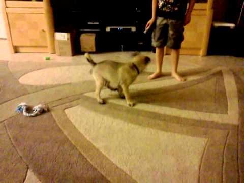 Funny puppy/stupid dog