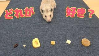 ぷんちゃんはどのドライフルーツが一番好きなのか!? きょんくま メイ...