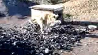 Собака пакет ебака