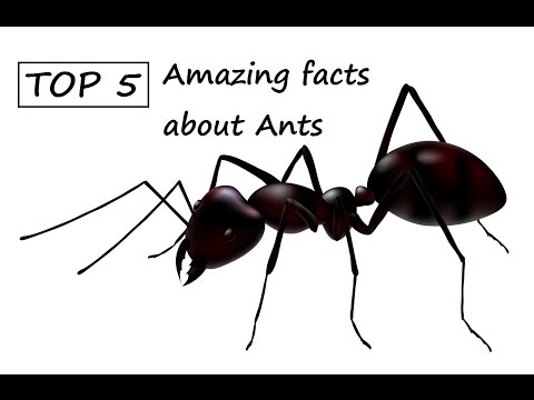 Top 5 | Amazing facts about Ants