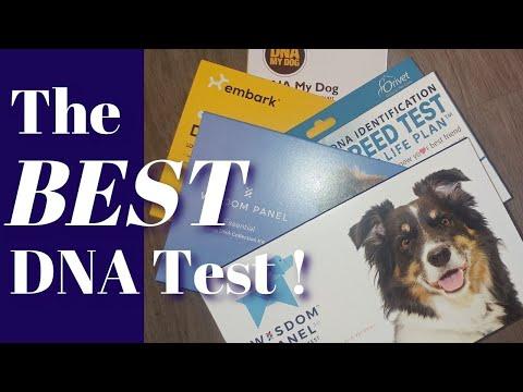 Best Dog DNA, 5 tests, same dog, non sponsored reviews