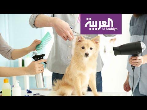 صباح العربية  صوالين خاصة للقطط والكلاب في الكويت  - نشر قبل 4 ساعة