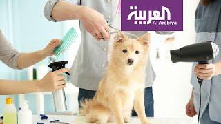 صباح العربية  صوالين خاصة للقطط والكلاب في الكويت
