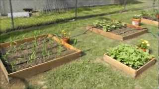 A Walk Through My Multi Raised Bed Square Foot Vegetable Garden (2 Weeks After Planting)