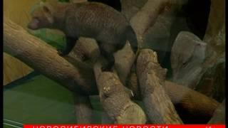 Почти вымерших собак научат размножаться в зоопарке