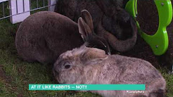 Could Your Rabbit Be Depressed?   This Morning